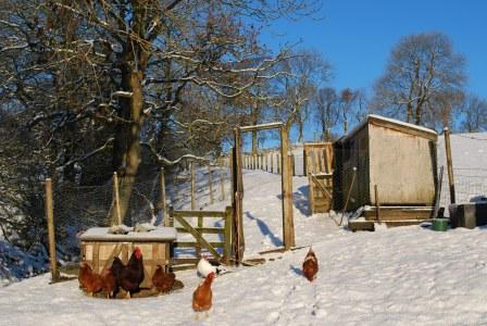 The Hen's and Hen Hut in the Snow