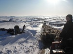 Bringing in the Sheep, Snow, Malham, Yorkshire Dales