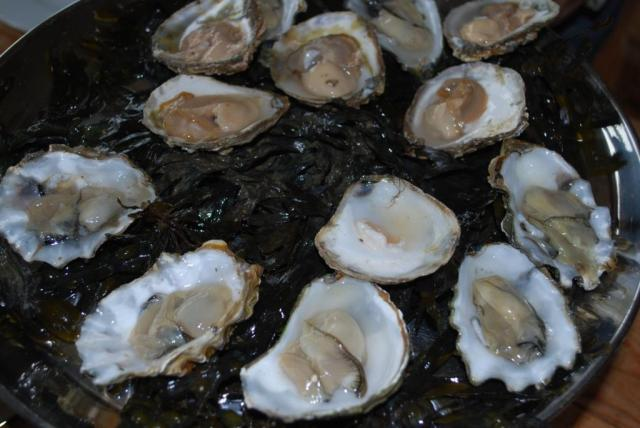 native and rock oysters