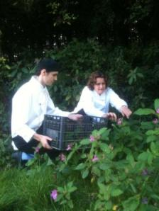 Stephanie Moon Wild Foraging Nettles